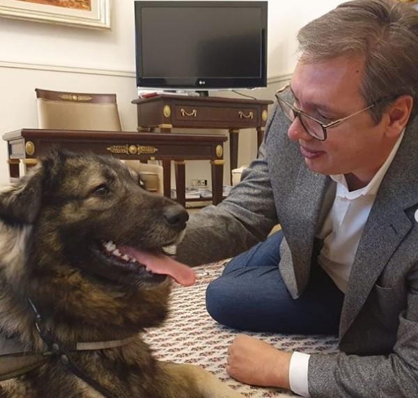Кучето Пако најмногу му се израдува: Вучиќ се врати во канцеларија