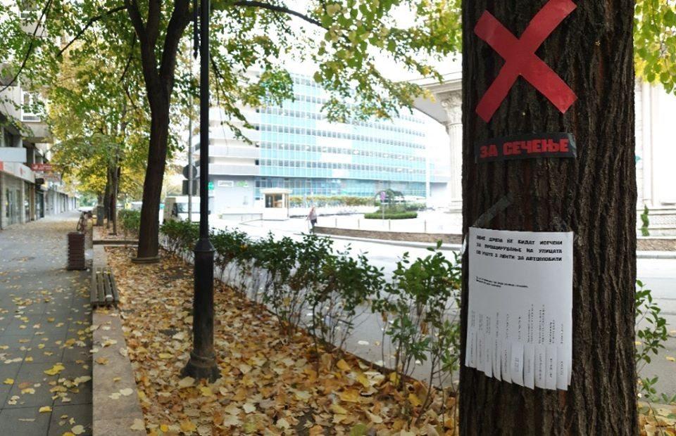 """Герила акција: Ќе """"загине"""" ли еден од најубавите дрвореди во центарот на Скопје?!"""
