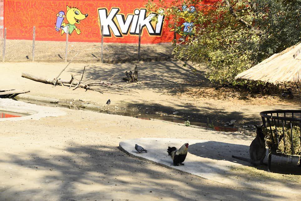 Реновирано живеалиштето за кенгурите во скопската Зоолошка