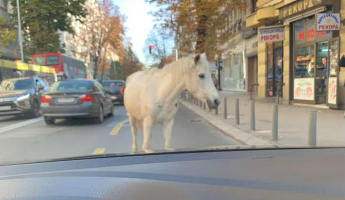 Коњ се прошета кај Рекорд
