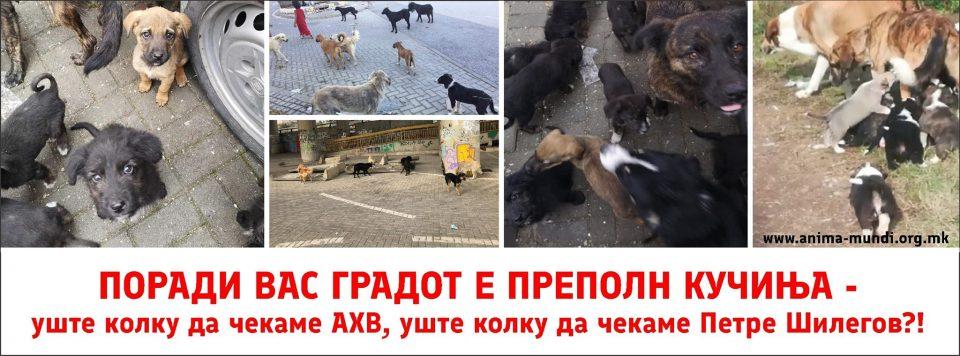 СДСМ ги излажа и Анима мунди: Ги прифатија сите наши барања, но буквално ништо не направија за животните