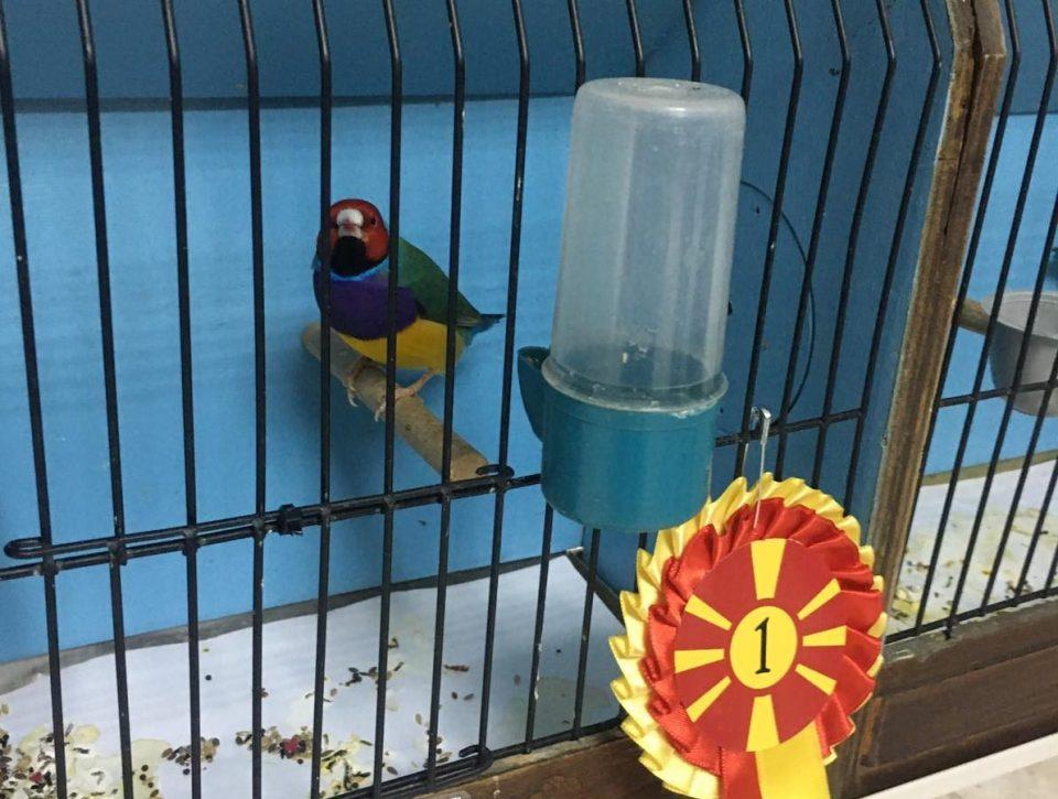 Изложба на птици во Природно-научниот музеј во Скопје