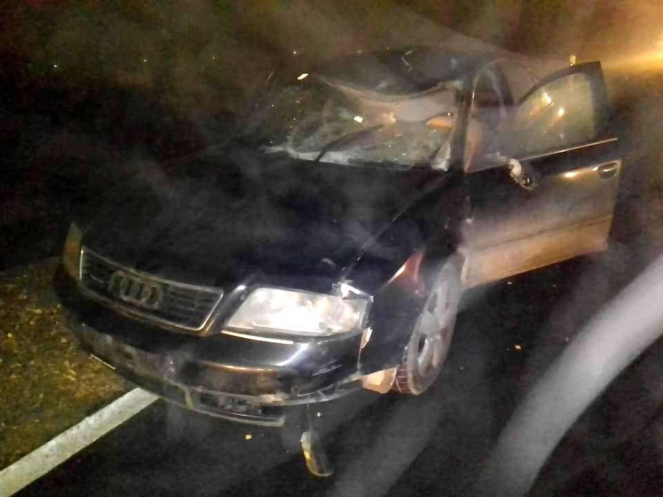 Автомобил удрил во коњ