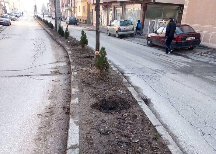 """Вторпат на исто место: Украдени новите садници од """"Солунска"""""""