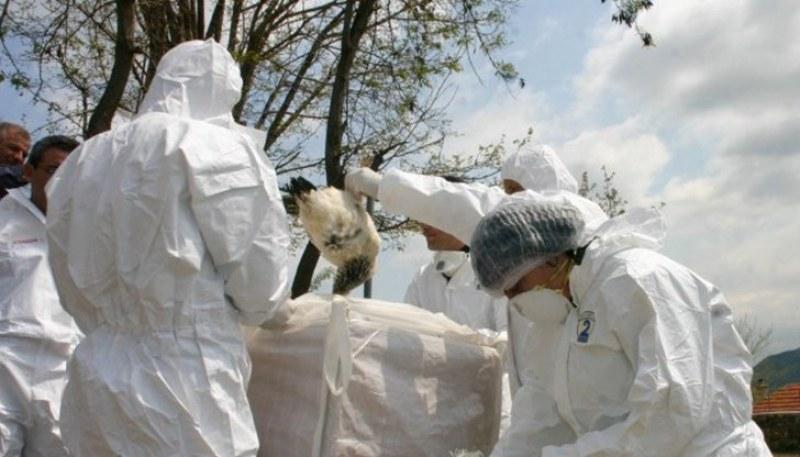 Вирусот на птичји грип Х5Н8 регистриран на фарма во Чешка