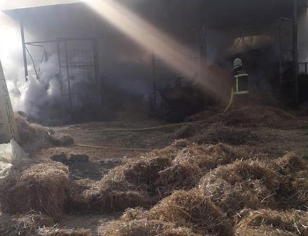 """Пожар во зоопросторија на гимназијата """"Браќа Миладиновци"""""""