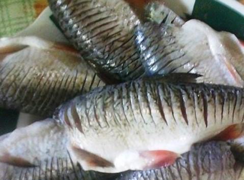 Во возило на патот Штип-Радовиш најдено големо количество риба