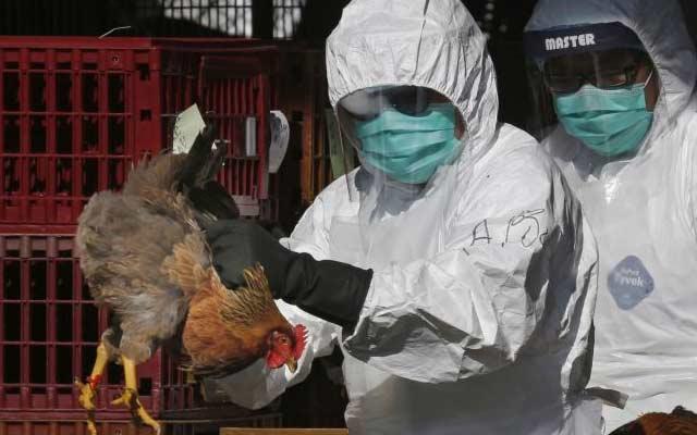 После коронавирусот – птичји грип во Кина