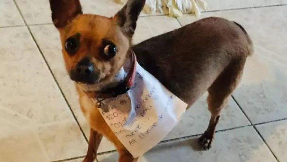 Мексиканец во карантин стана хит на социјалните мрежи: Гo испратил кучето во продавница