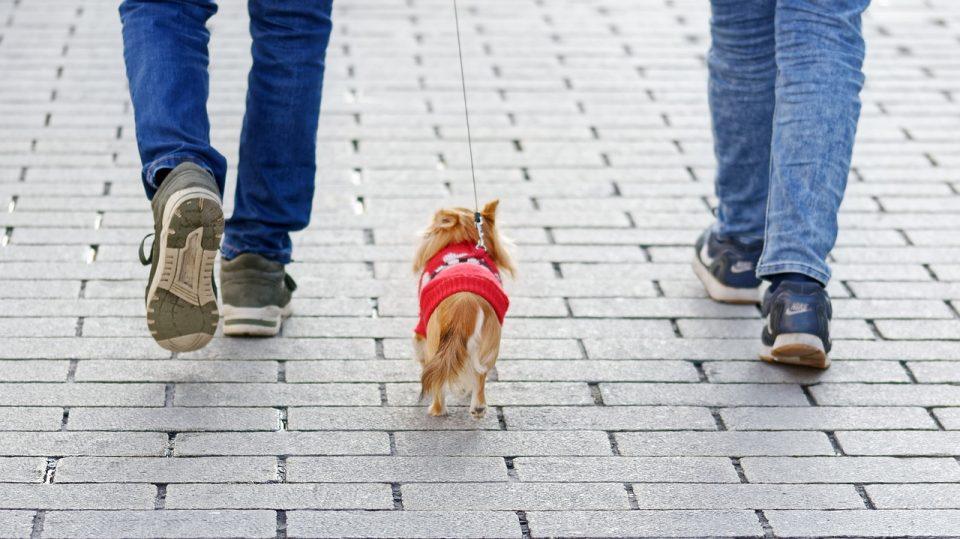 За домашните миленичиња остануваат востановените термини и за време на претстојниот продолжен викенд
