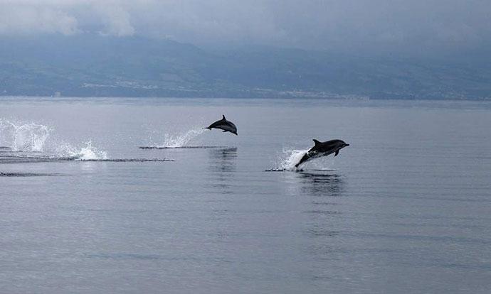 Јато делфини пливаат во близина на шеталиштето во Солун