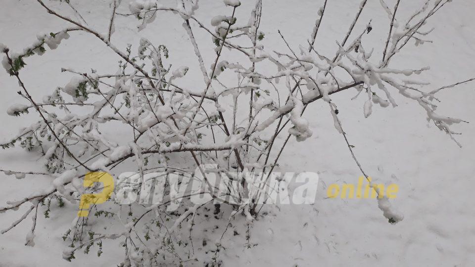 Најмногу снег во Битола, најстудено во Маврово