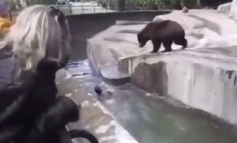 Пијан Полјак влегол во кафез во зоолошка и сакал да ја удави мечката