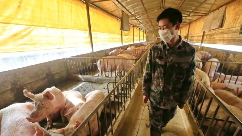 Истражувачите откриja нов свински грип со пандемски потенцијал