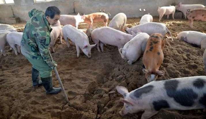 """СЗО """"внимателно"""" ќе ја разгледува студијата за новиот свински грип"""