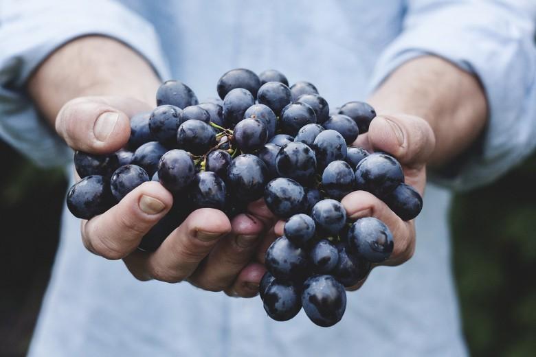 Црешите, смоквите, грозјето најбогати со шеќер