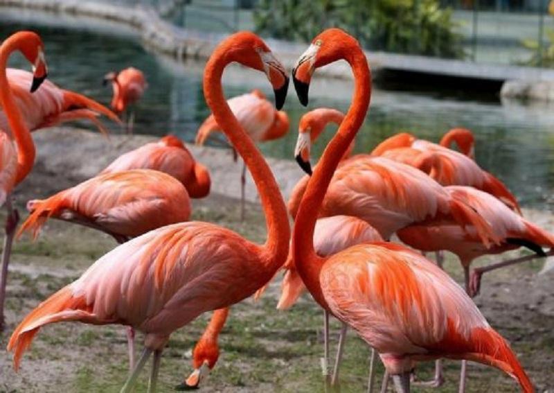 Се отвора живеалиштето на фламинга во Зоолошка градина