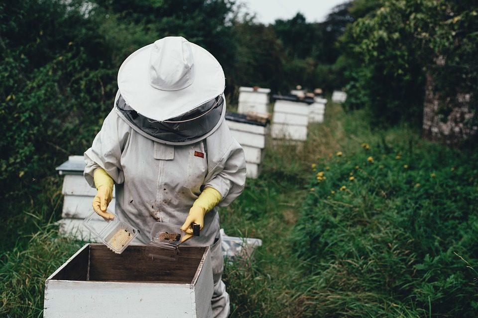 Февруарските студови предизвикаа големи штети во пчеларството