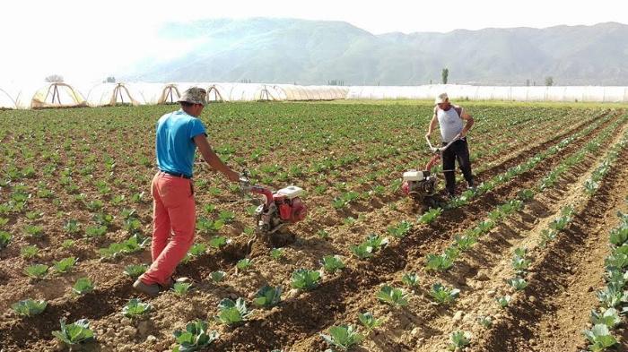 Од СДСМ велат дека се грижат за земјоделците