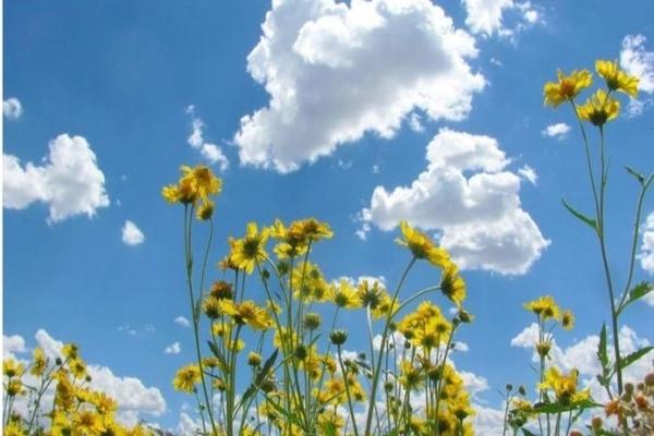 Променливо облачно со засилен северен ветер, температурите до 31 степен