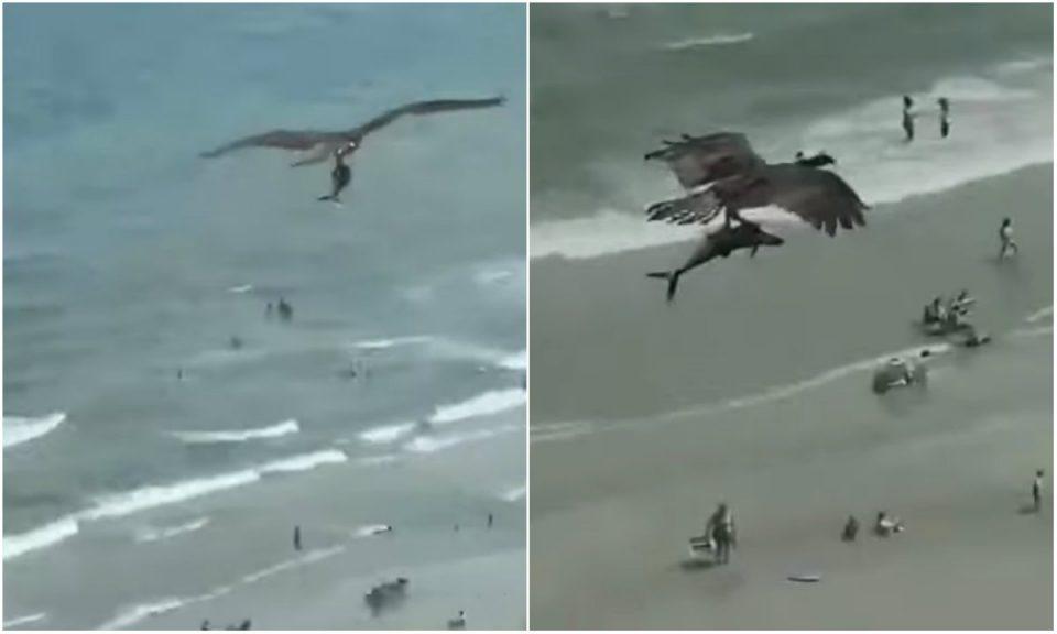 Орел зграпчи ајкула од морето: Фасцинантна снимка од плажата