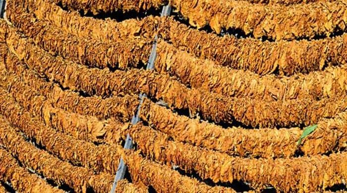 Николоски: Со влегување на Заеви во тутунскиот комбинат Струмица, целосно ќе се девалвира вредноста и цената на тутунот