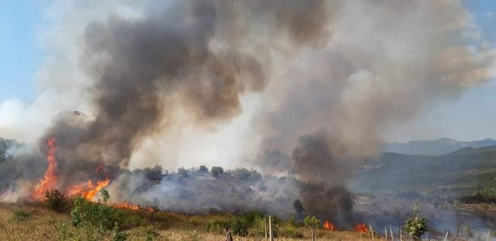 Пожар кај Тиквешко Езеро, гори и шума