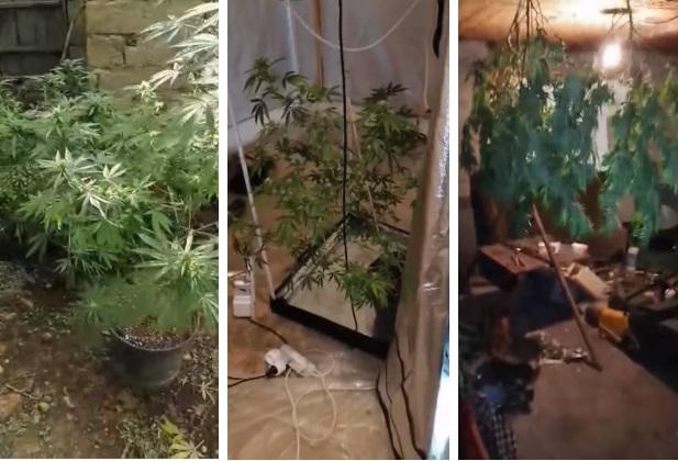 Откриена мини лабораторија и стебла канабис во Визбегово