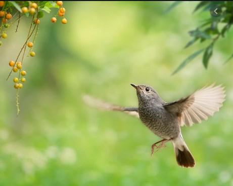 Мистерија: Птици преселници умираат во САД
