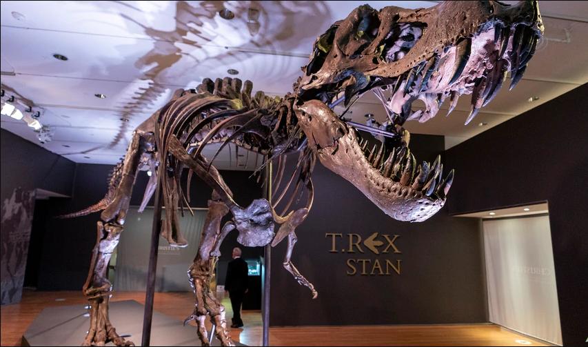 Костурот на еден од најпознатите тираносауруси на светот ставен на аукција во Лондон