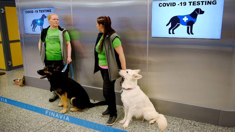 Кучиња откриваат Ковид-19 на аеродромот во Хелсинки