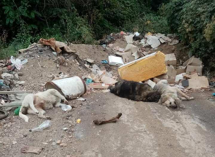 Мртви кучиња расфрлани низ дива депонија во Преспа (ВОЗНЕМИРУВАЧКО)