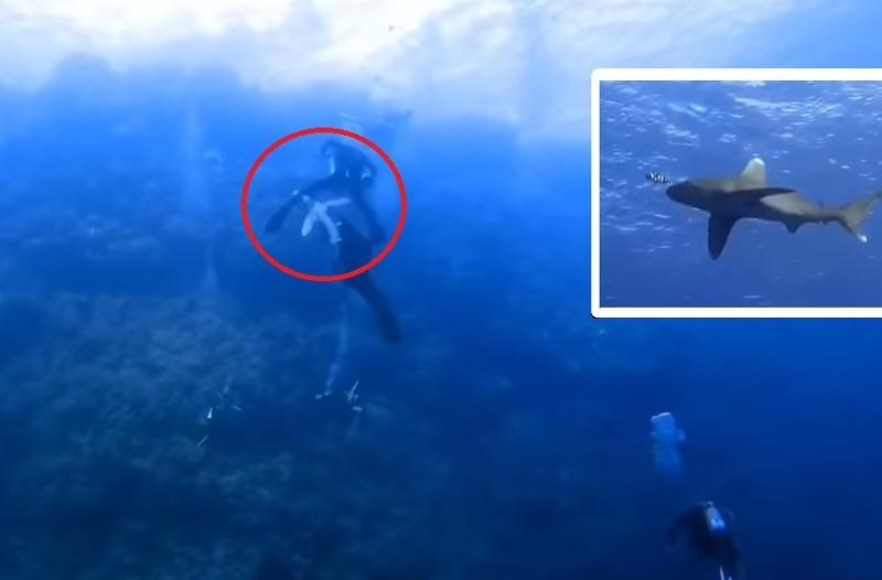 Ајкула му ја одгризала раката на 12-годишен турист во Шарм Ел Шеик во Египет