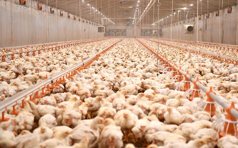 Заев: За прв пат во земјава ќе има сериозно производство на домашно пилешко месо