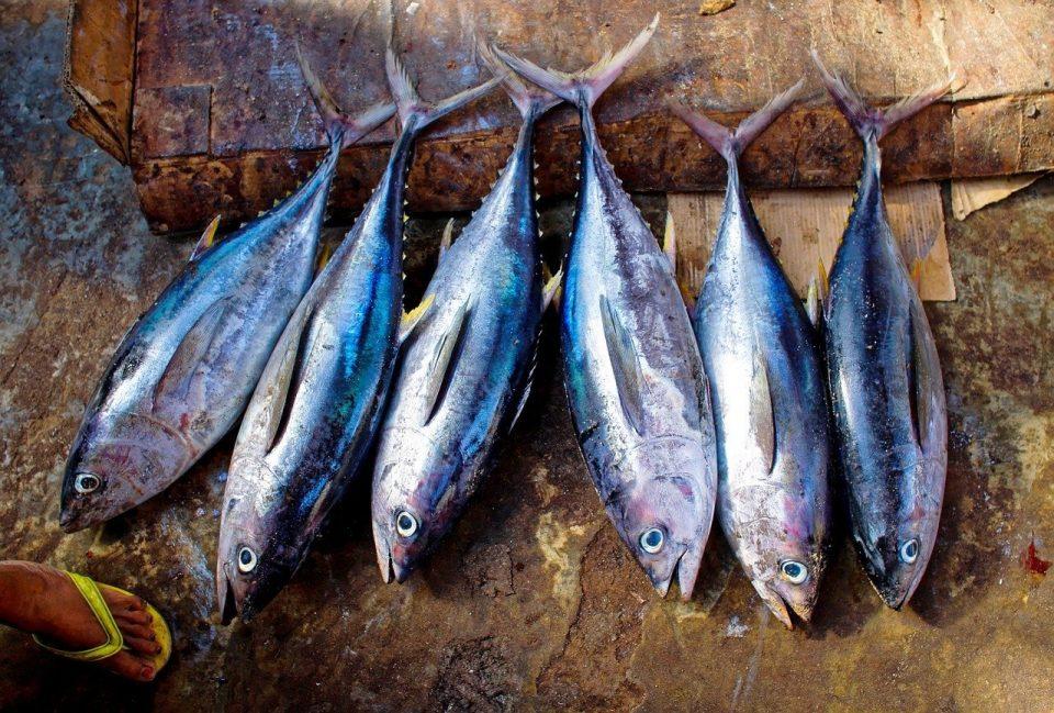 Кина забрани увоз на смрзната риба од Индонезија, најдена корона во пратките