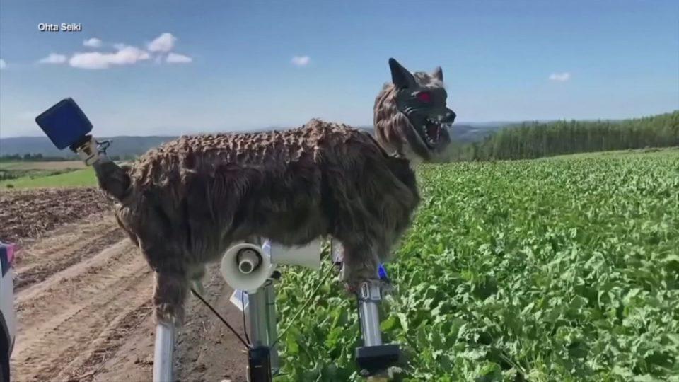 """Роботот """"Волк-чудовиште"""" спречува напади од мечки во Јапонија"""