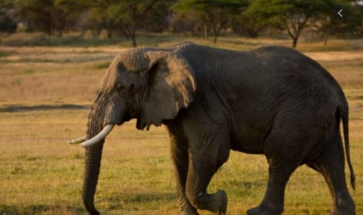Слон усмрти 14 лица во Индија