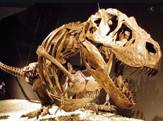Пронајден е ембрион од овој диносаурус