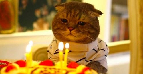 15 лица се заразија со ковид на роденденска забава за мачка