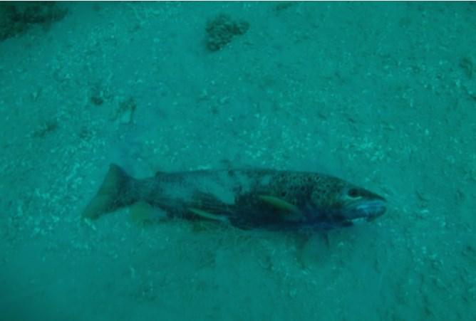 Во Охридското езеро риби се ловат со мрежи