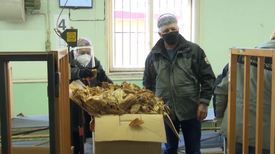 Хоџа: За три дена може да се откупи вишокот тутун од 1.500 тони