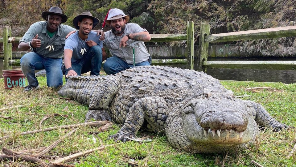 Десетици крокодили побегнале од одгледувачница во Јужна Африка