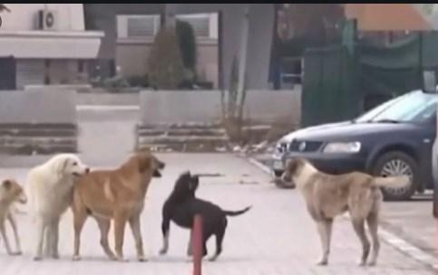 Само лежам, не можам да функционирам од болки и од страв: Тетовчанка со тужба за Општината откако ја искаса куче
