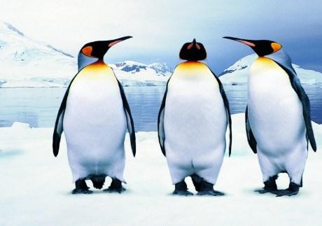 Латас: Шилегов да објасни како дал 360.000 евра за куќа за пингвини