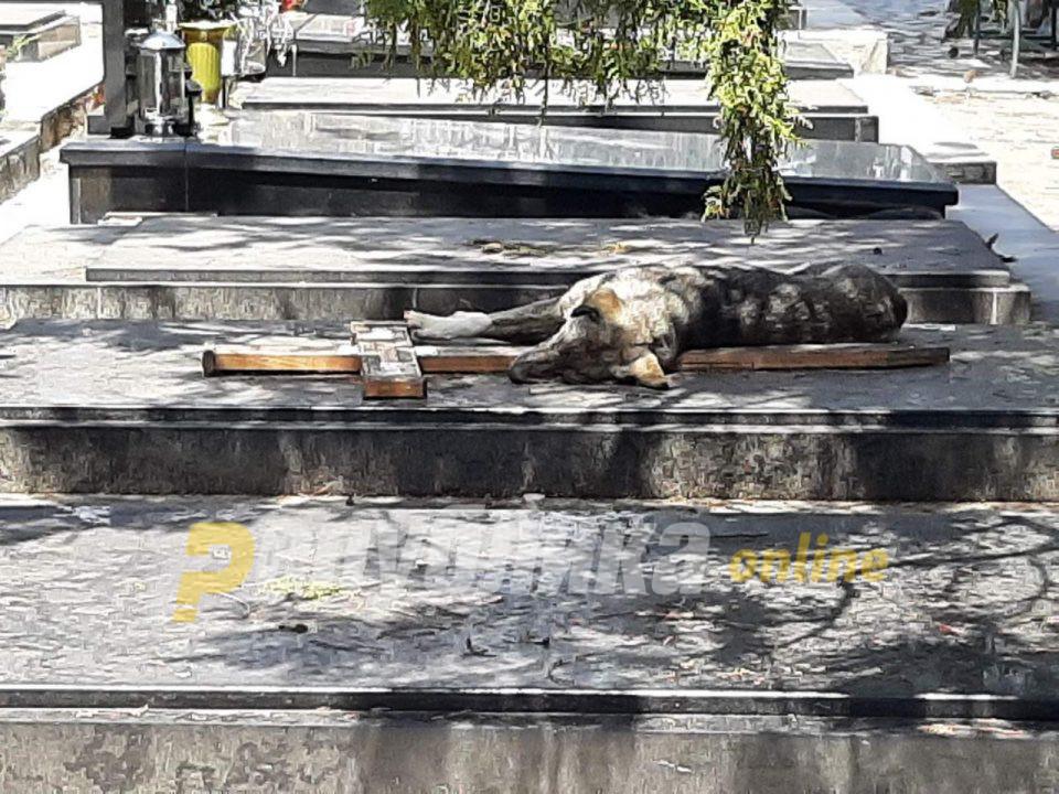 """Граѓаните не можат да дојдат до гробовите од кучиња скитници, прашуваат: За што постои """"Лајка""""?"""
