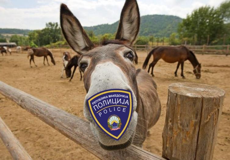 Оливер: Тренираното магаре ќе го замени украдениот полициски коњ