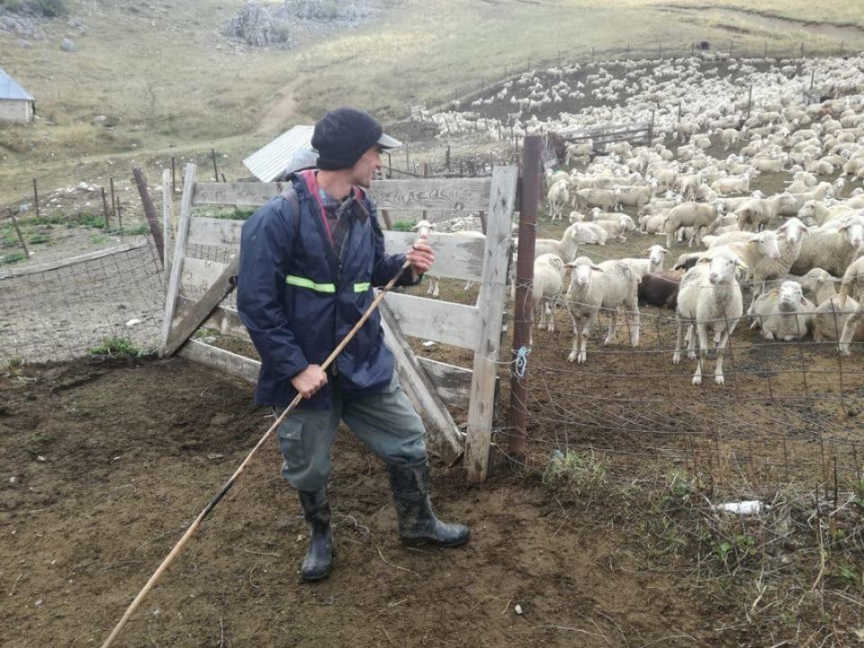 Даниловски: Како да сме овци, на кои им треба овчар со стап, да ги внесе во трло