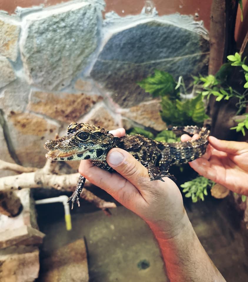 Скопската зоолошка градина има нов жител
