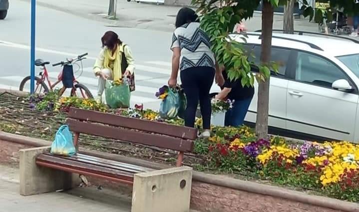 Полицијата трага по граѓаните што крадеа љубичици од пред Безистенот во Битола