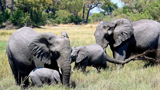Молња уби стадо од 18 индиски слонови